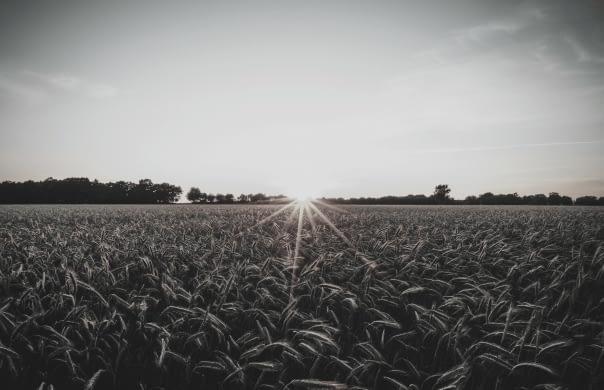 mesail cahaya berkat sector agriculture